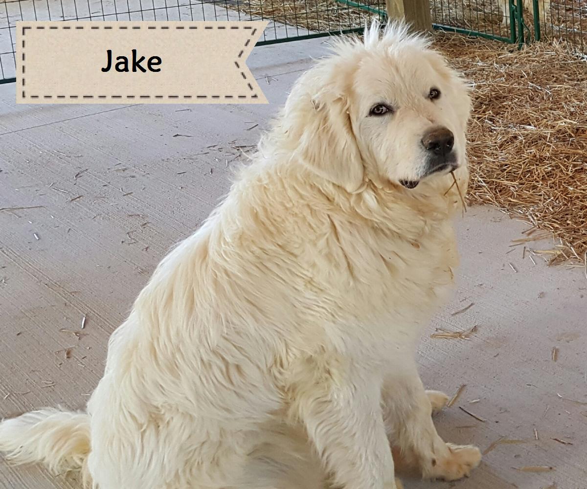 guard dog jake