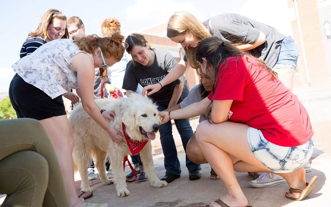 dog jake with longwood students