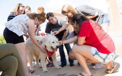 Study Paws at Longwood University 2016-17