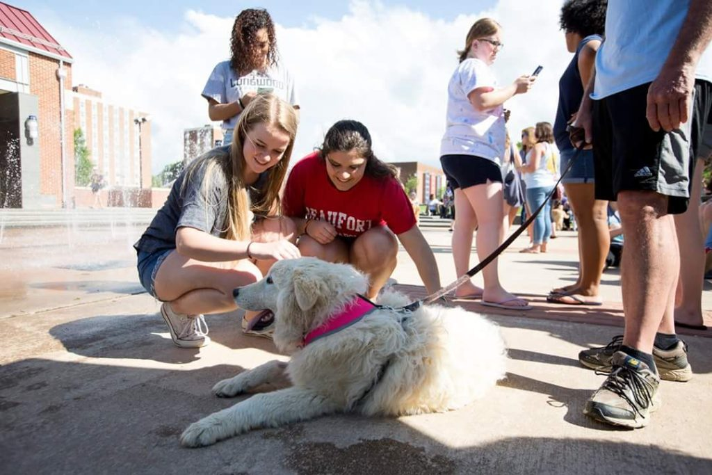 dog jili with longwood students