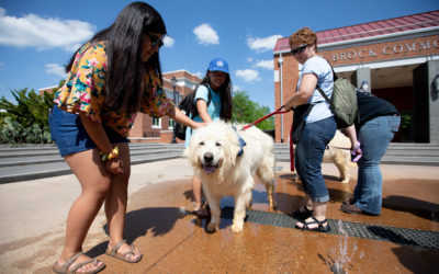 2019 Study Paws at Longwood University