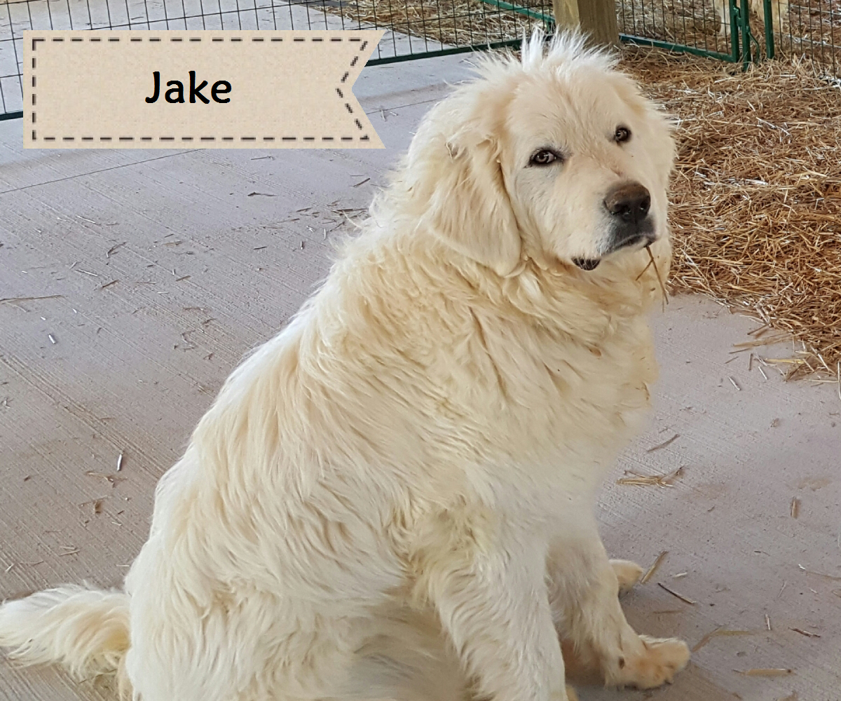guard dog jake