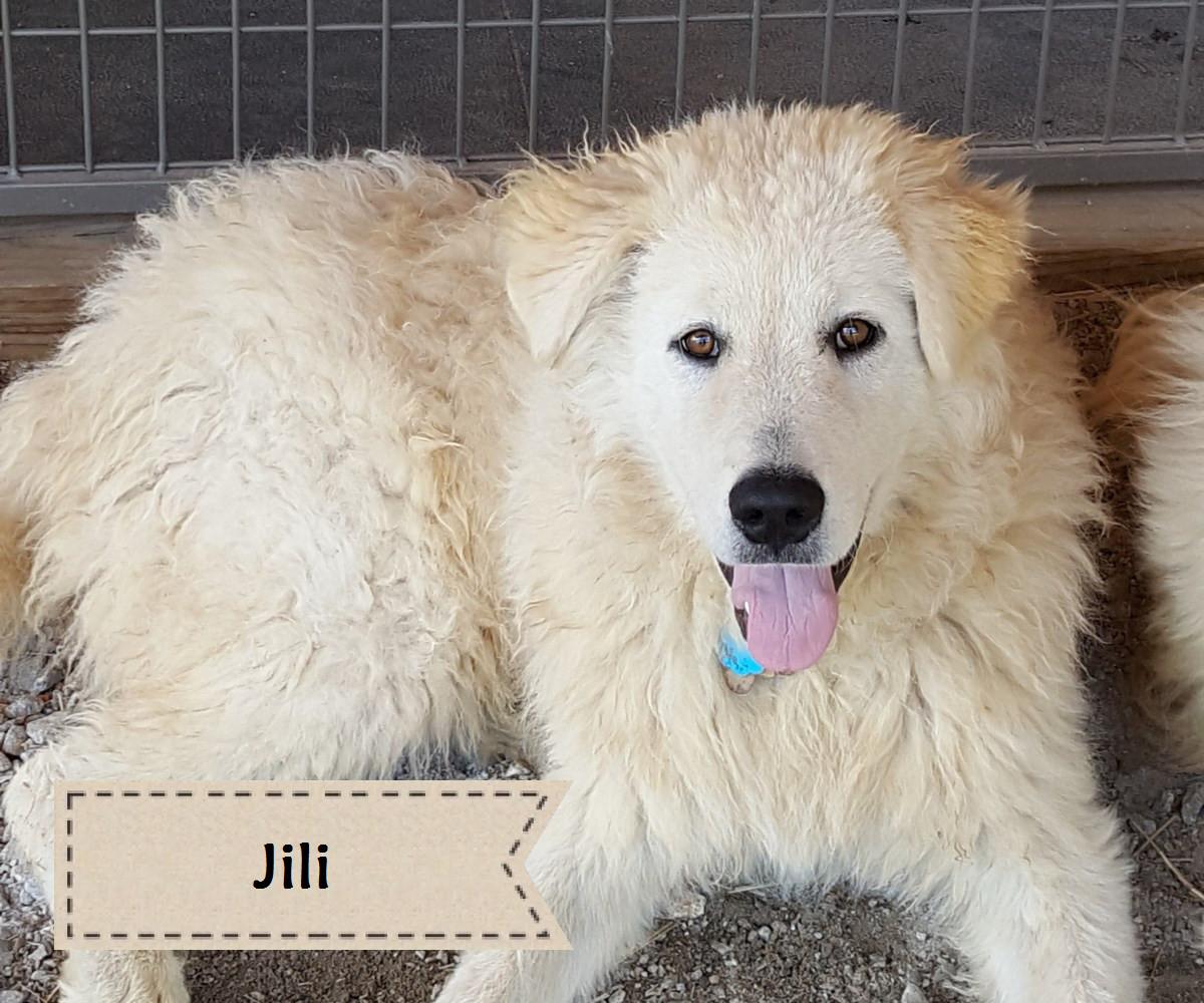 guard dog jili